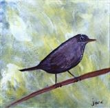 Little Blackbird by Jane Watson, Painting, Acrylic on canvas